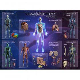 Human Anatomy Smart Mats, Set of 4