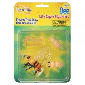 Honey Bee Life Cycle Stages