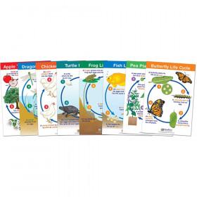 Life Cycles Bulletin Board Charts, Set of 8