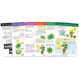 Photosysthesis Bulletin Board Chart Set, Grades 3-5