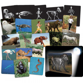 What's Inside Animals Card Set