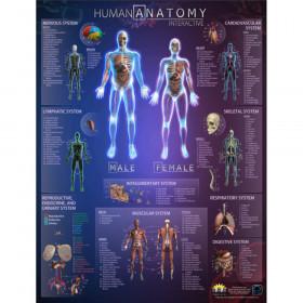 Human Anatomy Interactive Wall Chart with Free App