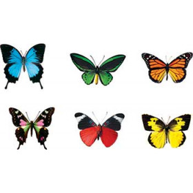 Butterflies Discovery Mini Accents Variety Pack 6 Designs 36/Pk