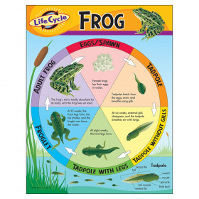 "Life Cycle of a Frog Learning Chart, 17"" x 22"""
