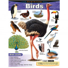 Exploring Birds Learning Chart