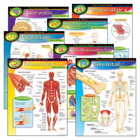 The Human Body Learning Charts Combo Pack, Set of 7