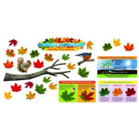 Why Leaves Change Color Mini Bulletin Board Set